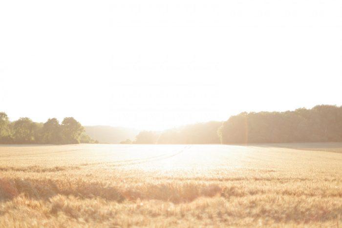 Love Session dans les champs de blé Love Session M&W dans les champs de blé 25 - Blog Mariage